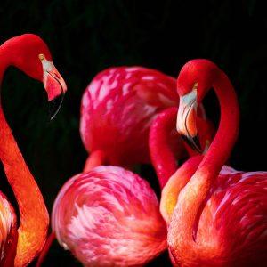 Blok 10 flamingos spotten